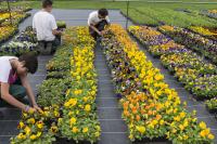 Apprentis d'Auteuil - formations horticoles