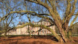 chamarande-arbres-remarquables-platane-domaine-320x180