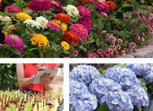 métiers de l'horticulture